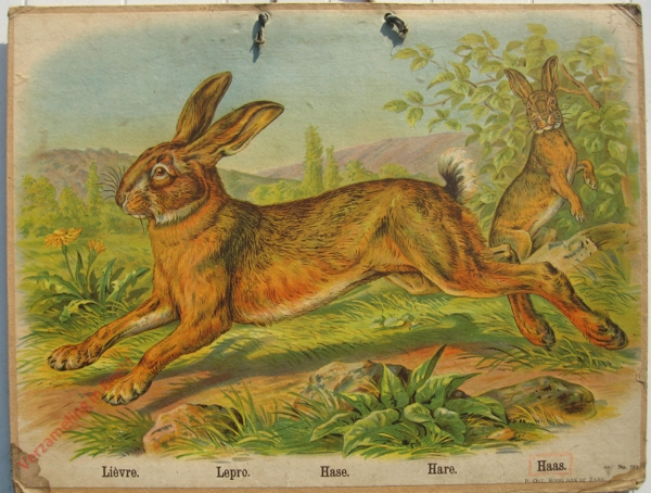753 - Lievre, Lepro, Hase, Hare, Haas